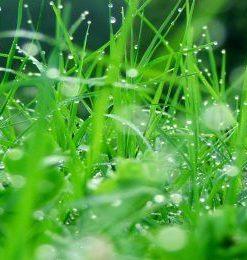 Hương hoa cỏ xanh tự nhiên